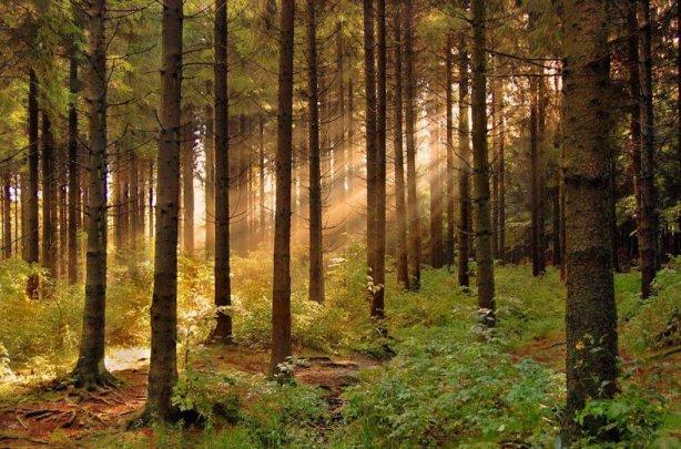 Український ліс. Фото: gazeta.zn.ua.