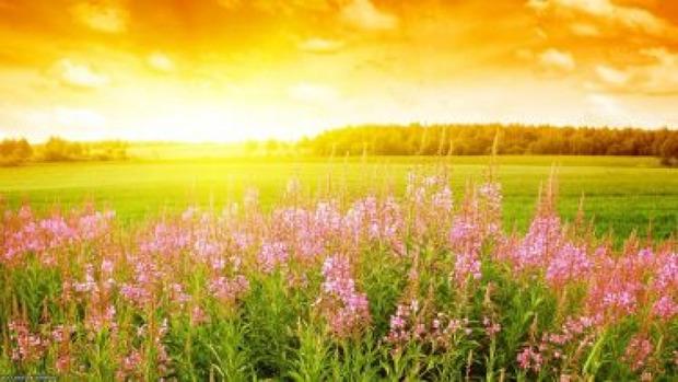 20 червня - день літнього сонцестояння. Фото: ЖЖ.