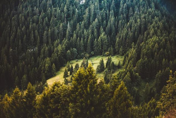 "Результат пошуку зображень за запитом ""карпатські ліси"""