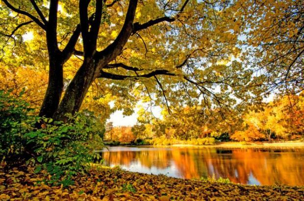Картинки по запросу вересень