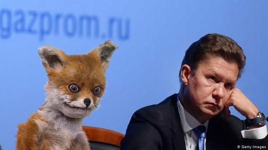Песець вже у Москві...